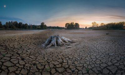 estrés hídrico sequía